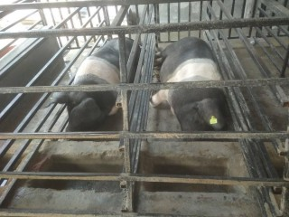 indriyabangura_farm