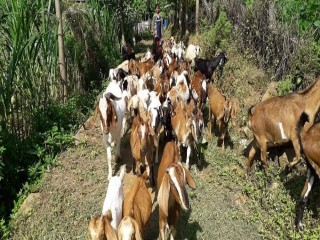 newarpani_unnat_goat_farm_group