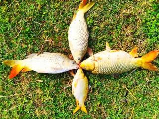 nepal_fish_farmers